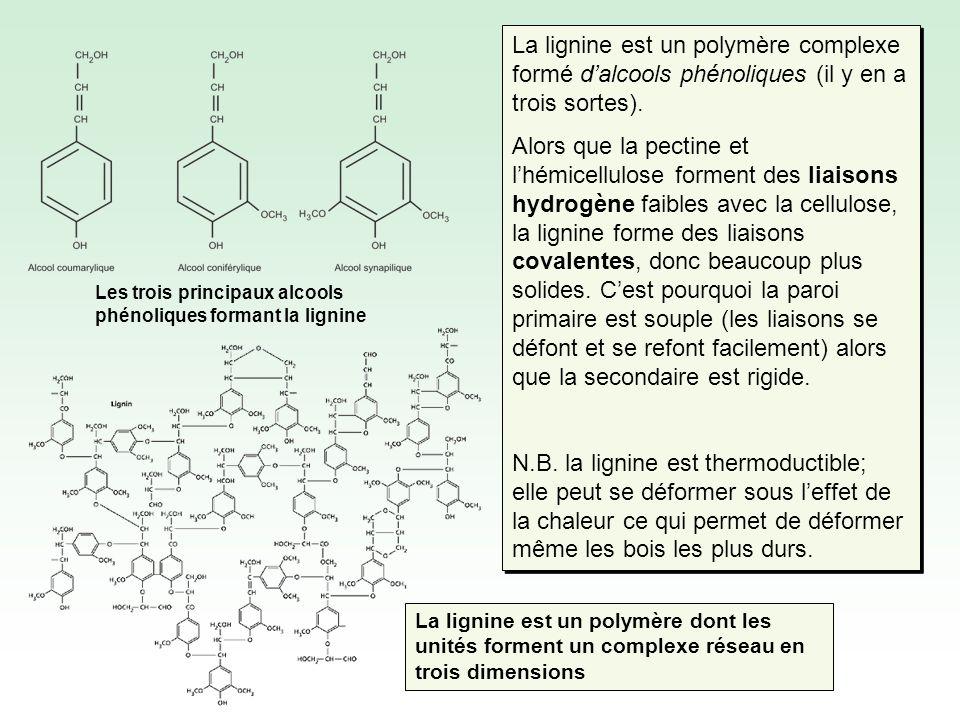La lignine est un polymère complexe formé dalcools phénoliques (il y en a trois sortes).