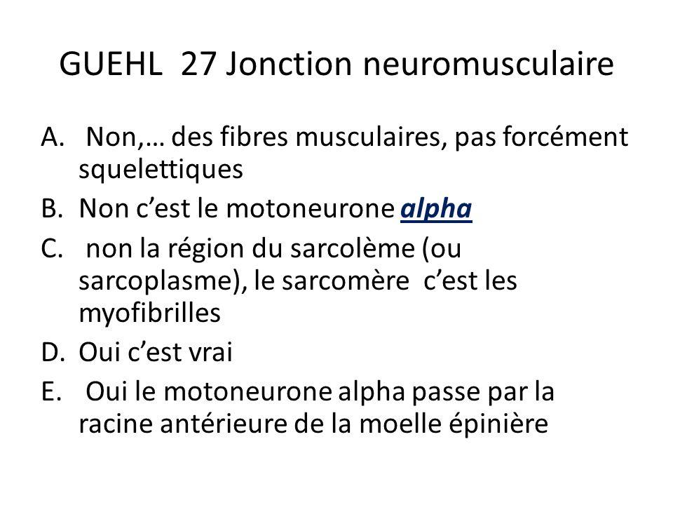 GUEHL 27 Jonction neuromusculaire A. Non,… des fibres musculaires, pas forcément squelettiques B.Non cest le motoneurone alpha C. non la région du sar