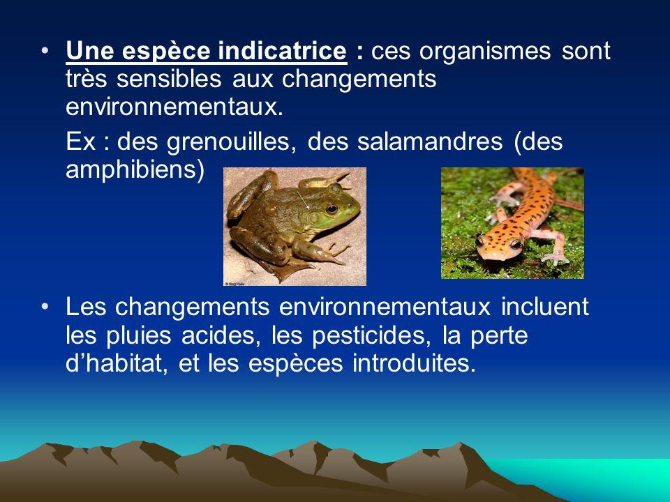 Une espèce indicatrice : ces organismes sont très sensibles aux changements environnementaux.