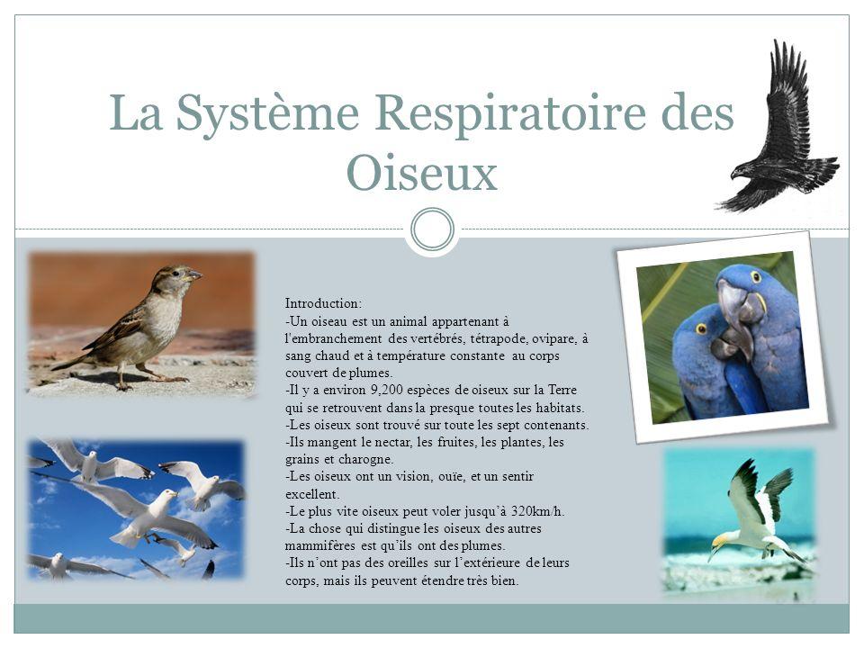 La Système Respiratoire des Oiseux Introduction: -Un oiseau est un animal appartenant à l'embranchement des vertébrés, tétrapode, ovipare, à sang chau