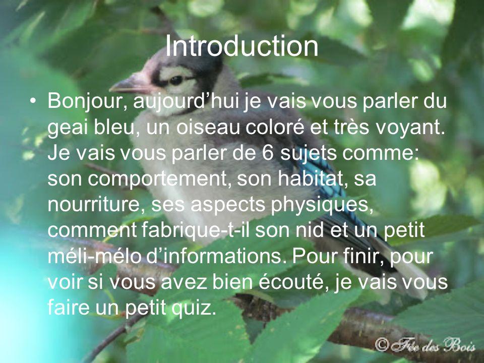 Introduction Bonjour, aujourdhui je vais vous parler du geai bleu, un oiseau coloré et très voyant. Je vais vous parler de 6 sujets comme: son comport
