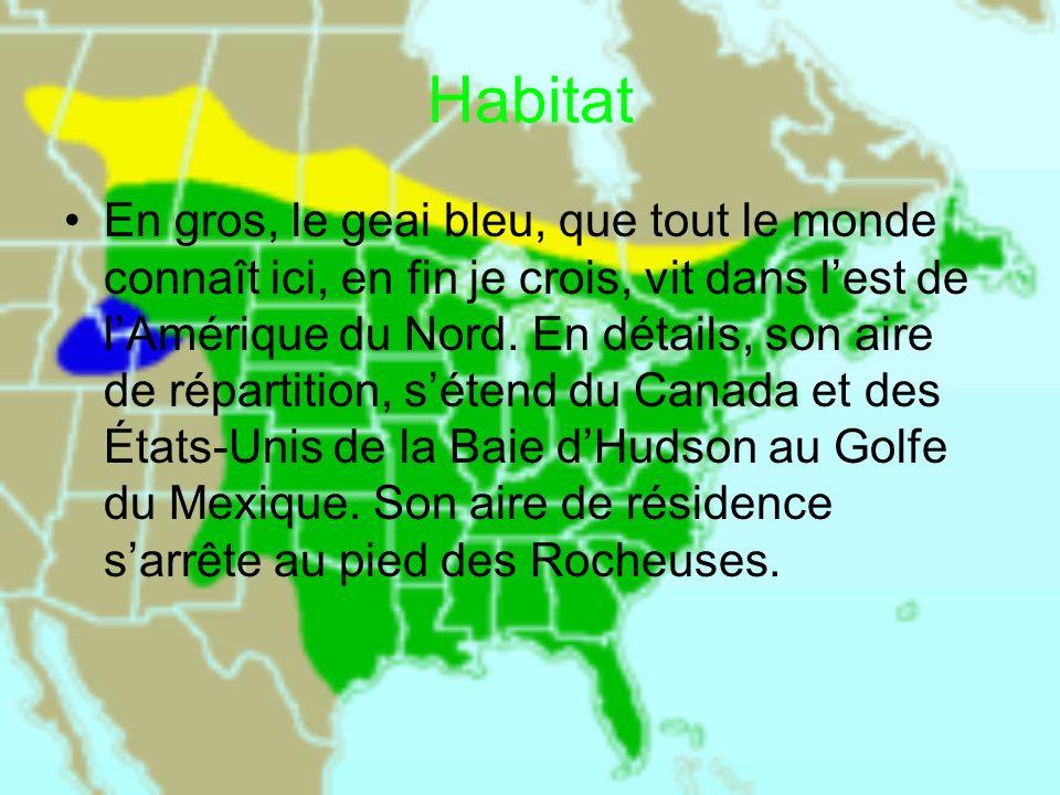 Habitat En gros, le geai bleu, que tout le monde connaît ici, en fin je crois, vit dans lest de lAmérique du Nord. En détails, son aire de répartition