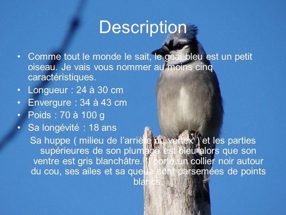 Description Comme tout le monde le sait, le geai bleu est un petit oiseau. Je vais vous nommer au moins cinq caractéristiques. Longueur : 24 à 30 cm E