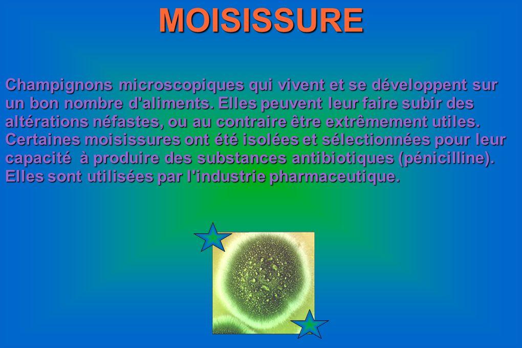 MOISISSURE Champignons microscopiques qui vivent et se développent sur un bon nombre d'aliments. Elles peuvent leur faire subir des altérations néfast