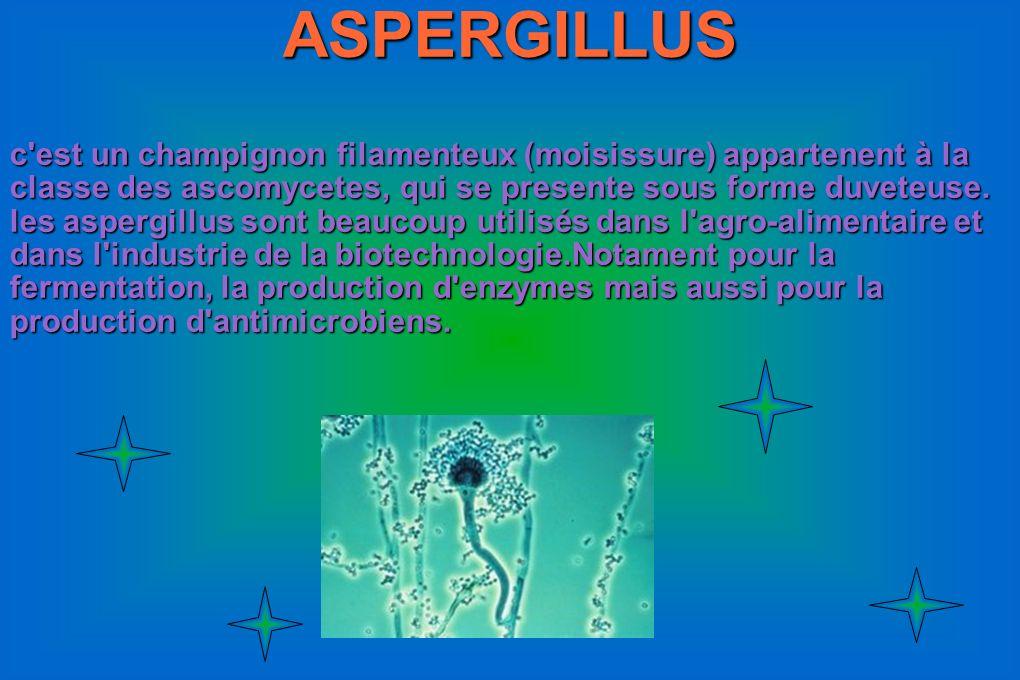 ASPERGILLUS c'est un champignon filamenteux (moisissure) appartenent à la classe des ascomycetes, qui se presente sous forme duveteuse. les aspergillu