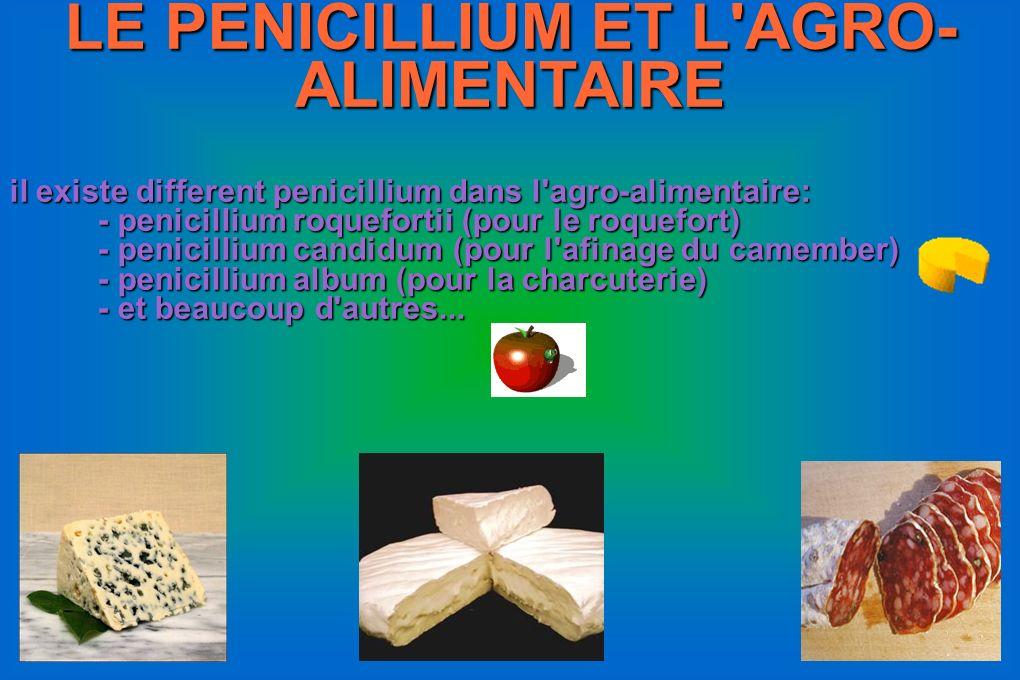 LE PENICILLIUM ET L'AGRO- ALIMENTAIRE il existe different penicillium dans l'agro-alimentaire: - penicillium roquefortii (pour le roquefort) - penicil