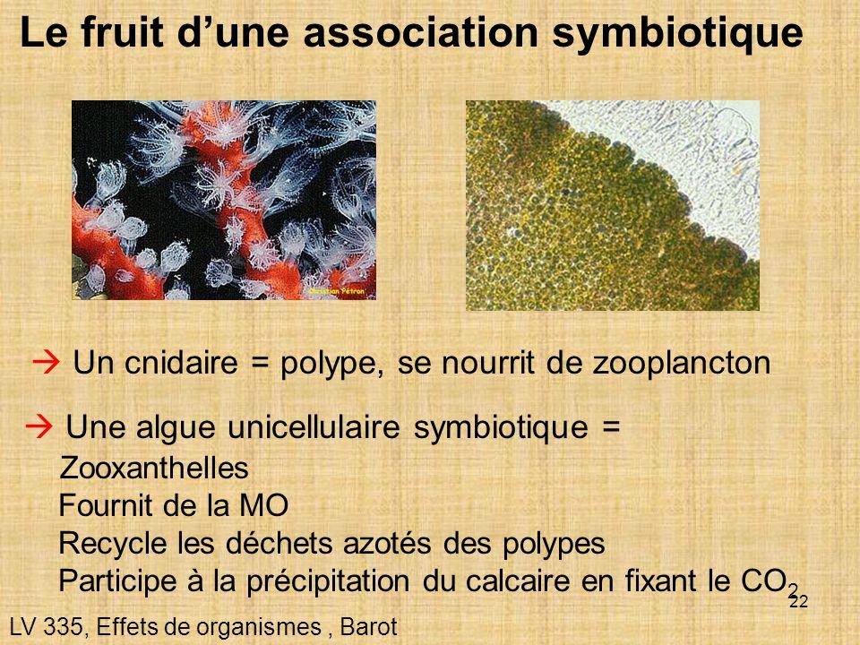22 Le fruit dune association symbiotique LV 335, Effets de organismes, Barot Un cnidaire = polype, se nourrit de zooplancton Une algue unicellulaire s