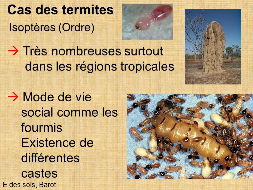 29 Isoptères (Ordre) E des sols, Barot Cas des termites Très nombreuses surtout dans les régions tropicales Mode de vie social comme les fourmis Exist