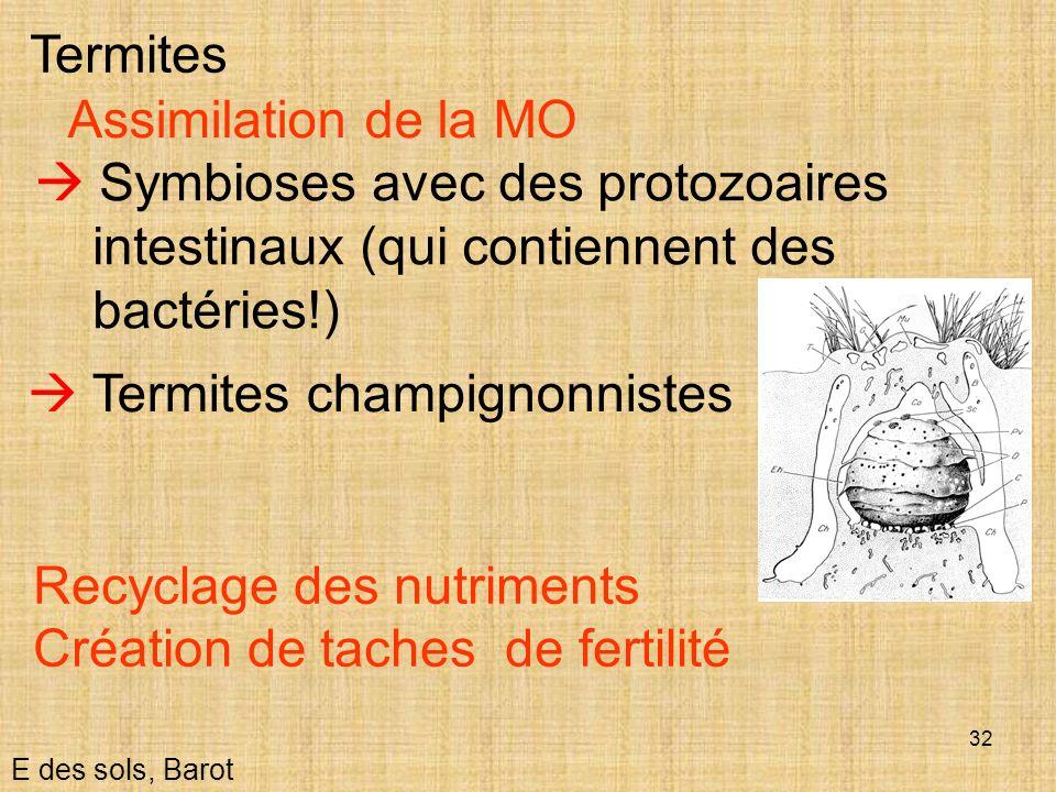 32 E des sols, Barot Termites Assimilation de la MO Symbioses avec des protozoaires intestinaux (qui contiennent des bactéries!) Termites champignonni