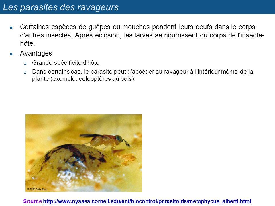 Les parasites des ravageurs Certaines espèces de guêpes ou mouches pondent leurs oeufs dans le corps d'autres insectes. Après éclosion, les larves se