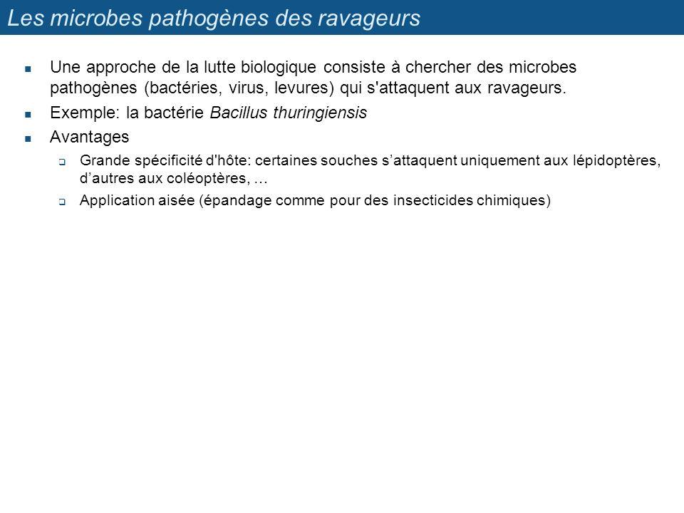 Les microbes pathogènes des ravageurs Une approche de la lutte biologique consiste à chercher des microbes pathogènes (bactéries, virus, levures) qui