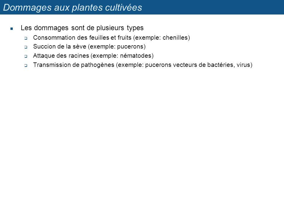 Dommages aux plantes cultivées Les dommages sont de plusieurs types Consommation des feuilles et fruits (exemple: chenilles) Succion de la sève (exemp