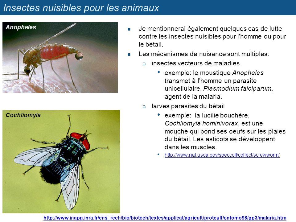 Insectes nuisibles pour les animaux Je mentionnerai également quelques cas de lutte contre les insectes nuisibles pour l'homme ou pour le bétail. Les