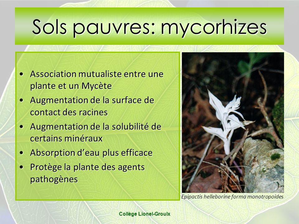 Collège Lionel-Groulx Sols pauvres: mycorhizes Association mutualiste entre une plante et un MycèteAssociation mutualiste entre une plante et un Mycèt