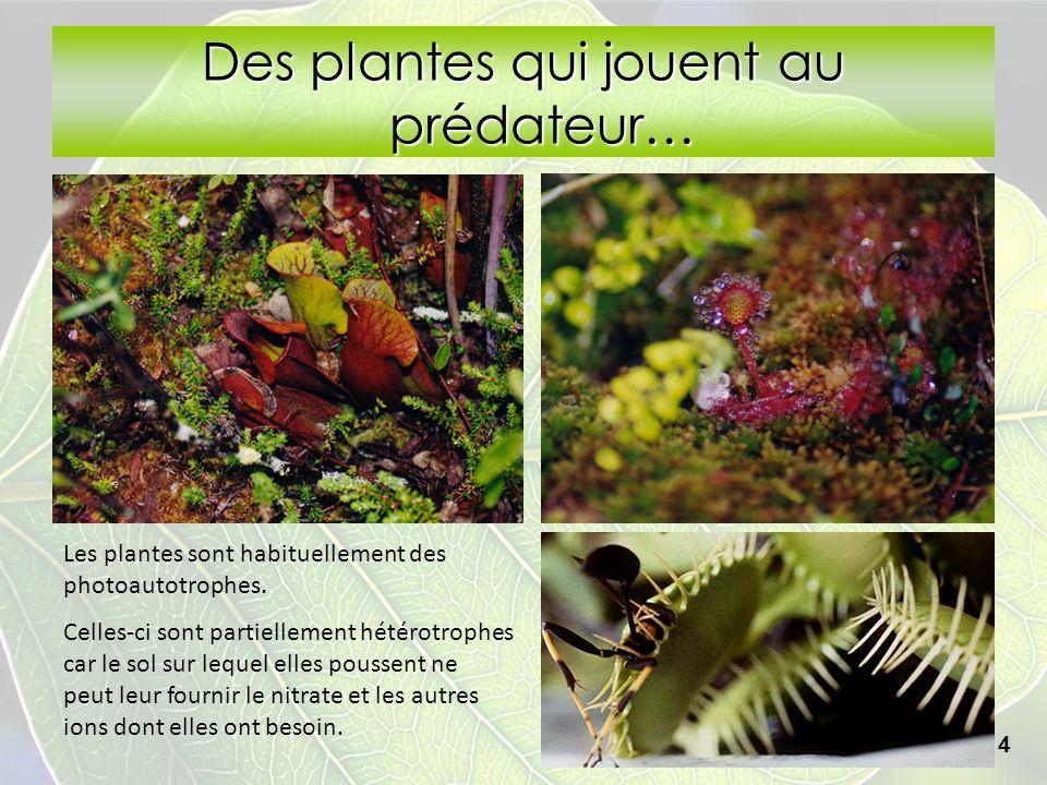 Des plantes qui jouent au prédateur… 14 Les plantes sont habituellement des photoautotrophes. Celles-ci sont partiellement hétérotrophes car le sol su