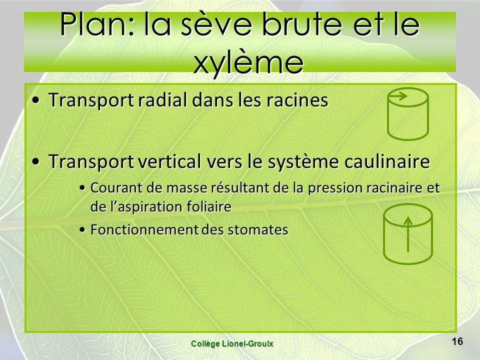 Plan: la sève brute et le xylème Transport radial dans les racinesTransport radial dans les racines Transport vertical vers le système caulinaireTrans