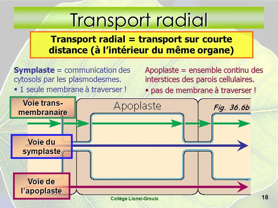 Collège Lionel-Groulx 18 Transport radial Voie trans- membranaire Fig. 36.6b Transport radial = transport sur courte distance (à lintérieur du même or