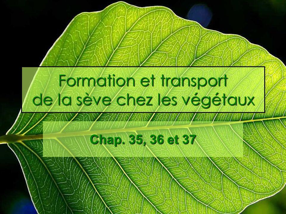 Formation et transport de la sève chez les végétaux Chap. 35, 36 et 37