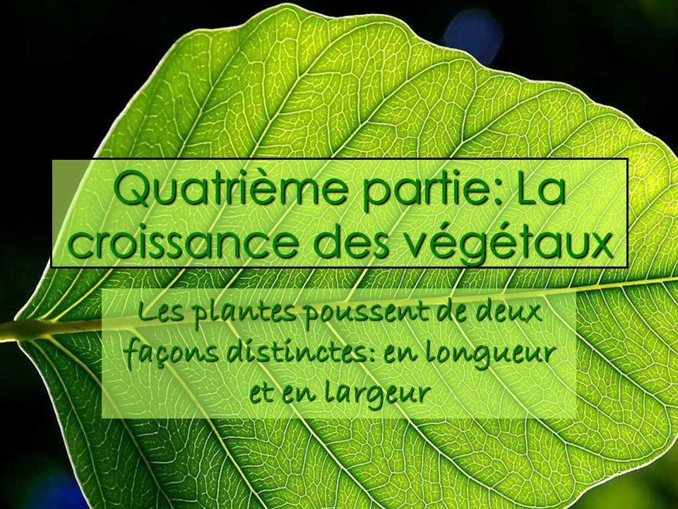 Quatrième partie: La croissance des végétaux Les plantes poussent de deux façons distinctes: en longueur et en largeur