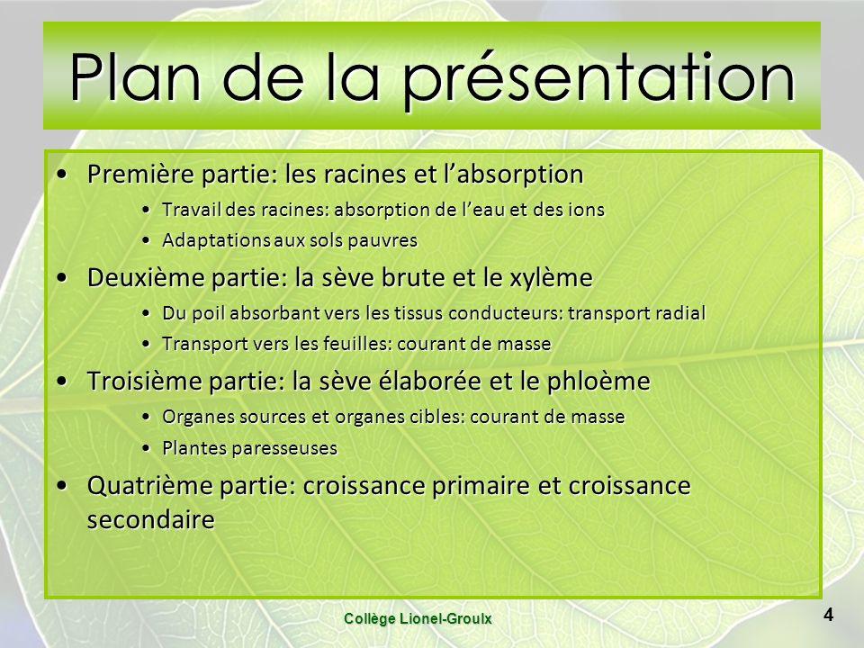 Plan de la présentation Première partie: les racines et labsorptionPremière partie: les racines et labsorption Travail des racines: absorption de leau