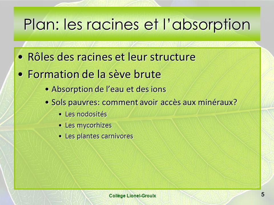 Plan: les racines et labsorption Rôles des racines et leur structureRôles des racines et leur structure Formation de la sève bruteFormation de la sève