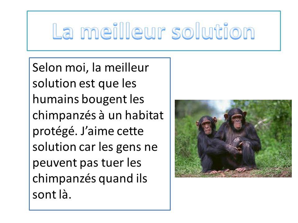 Selon moi, la meilleur solution est que les humains bougent les chimpanzés à un habitat protégé.