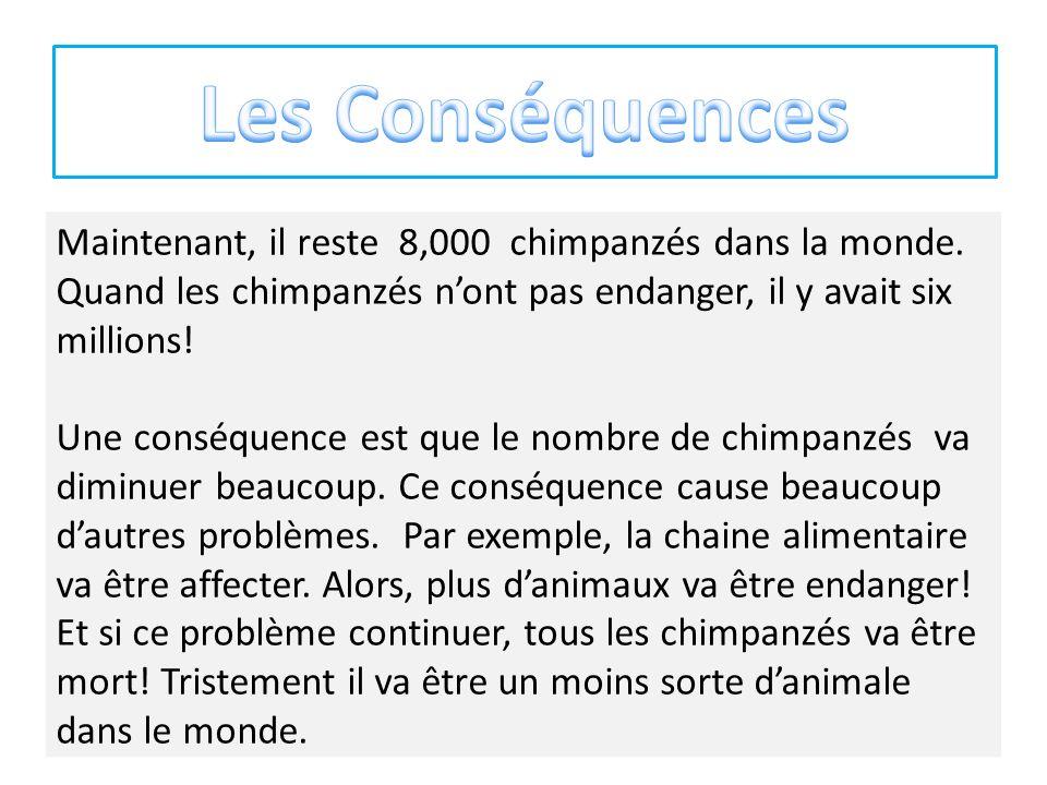 Maintenant, il reste 8,000 chimpanzés dans la monde.
