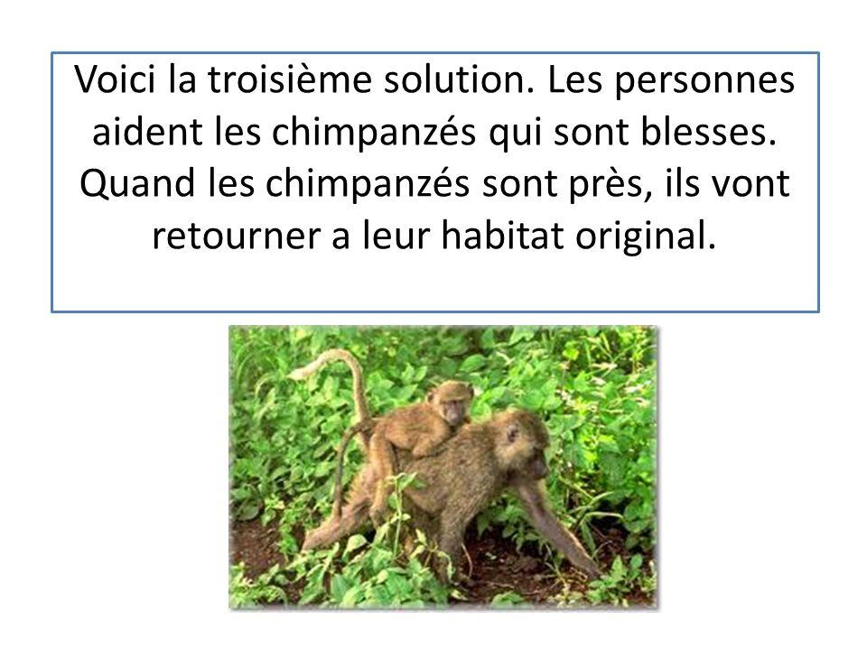 Voici la troisième solution.Les personnes aident les chimpanzés qui sont blesses.