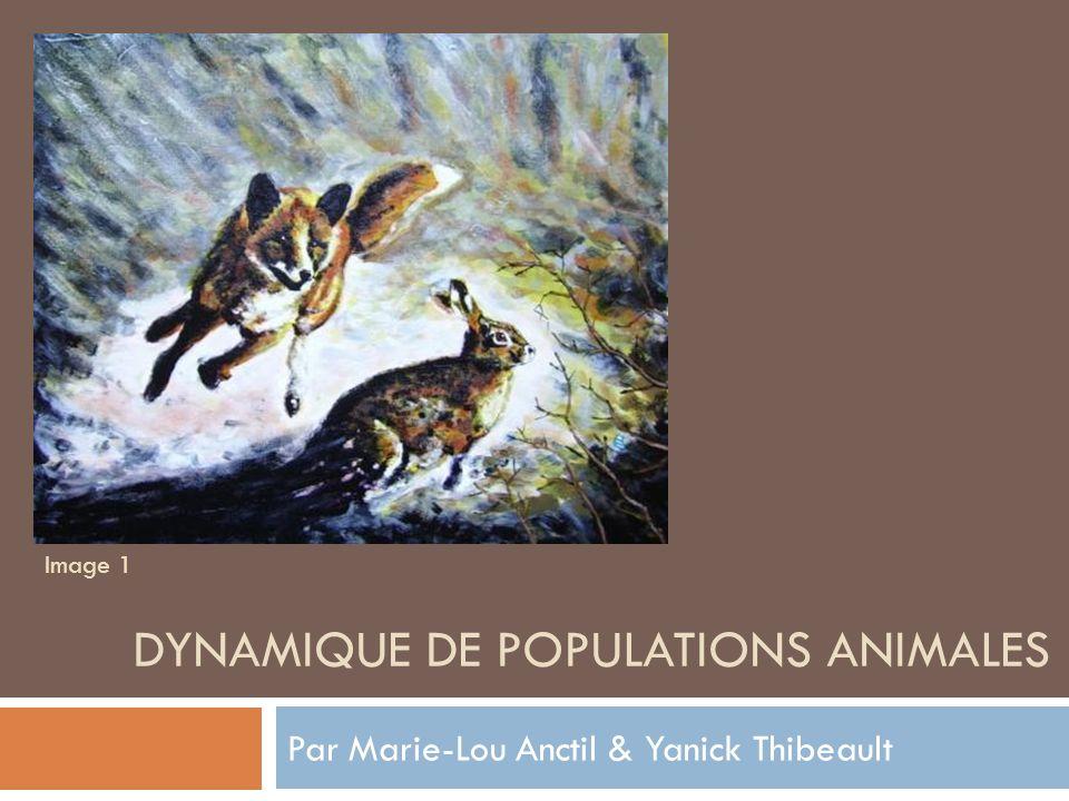 Déroulement But: Faire la gestion de la faune sur une zone fermée Lièvres et renards Lotka-Volterra Constantes naturelles Repérage Échantillonnage Conclusion Maple Image 2