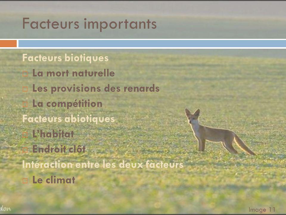 Des constantes plausibles… α=0,5 (Taux de reproduction des lièvres) β=0,36 (Taux de mortalité des renards) h=0,056 (Taux dinteraction défavorable aux lièvres) k=0,003 (Taux dinteraction favorable aux renards) Population initiale de lièvre = 100 Population initiale de renard = 10