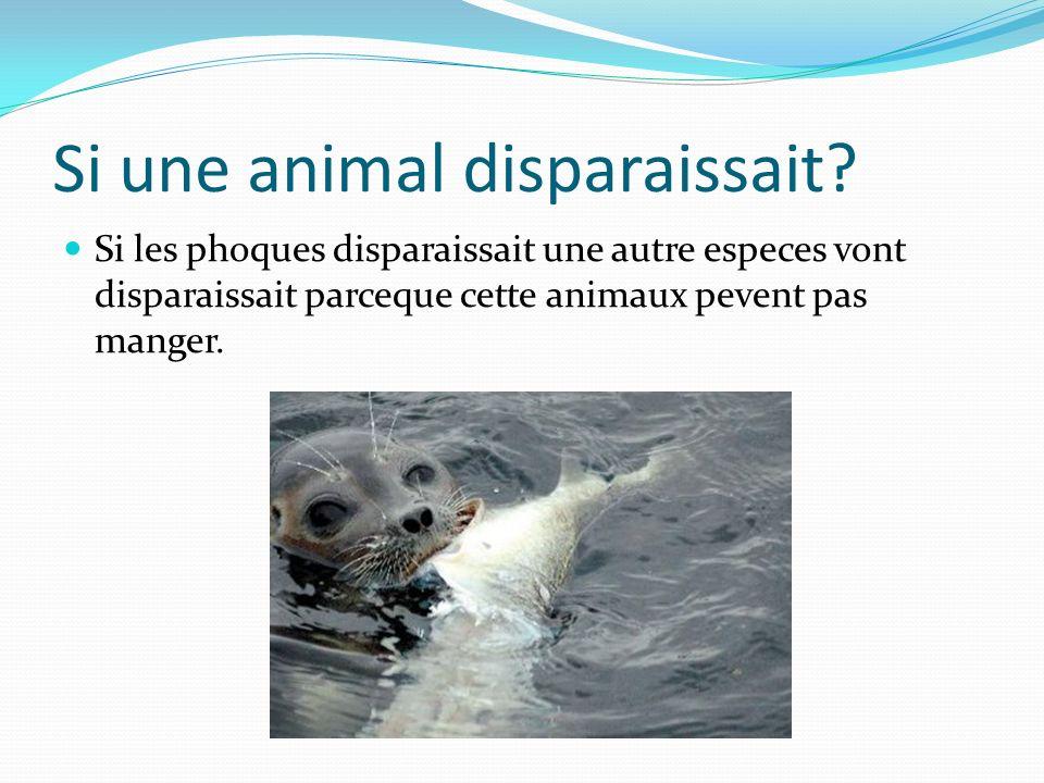 Un chaine alimentaire de arctique Le plankton est mange par les poissons est le poissons et mange par le phoque.