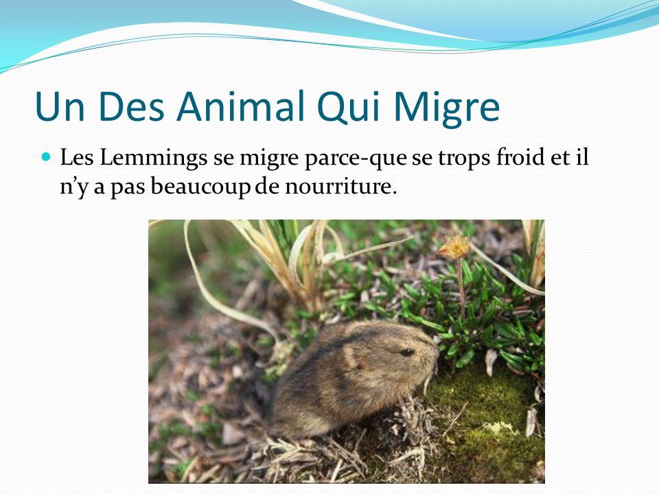 Les Animaux Et Le Migration Il y a beaucoup des animaux dans la Artique. Des animaux sont migre en hiver.Le migre est quand des certaine animaux creus