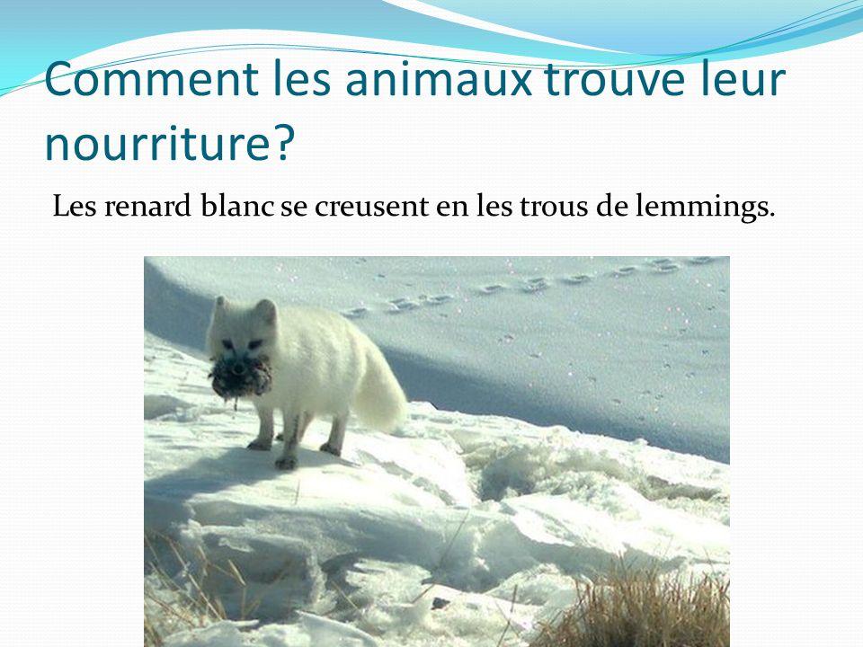 Quest camouflage? Le lapin blanc camouflage parceque le neige est blanc et lapin est aussi.