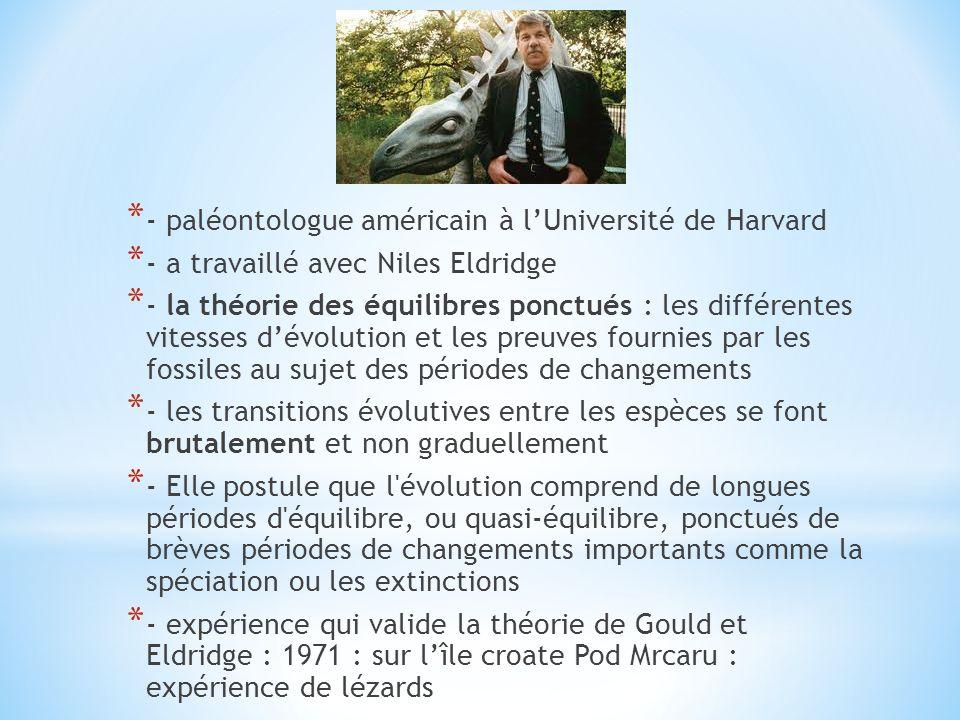 * - paléontologue américain à lUniversité de Harvard * - a travaillé avec Niles Eldridge * - la théorie des équilibres ponctués : les différentes vite