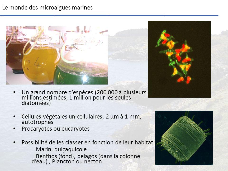 Le monde des microalgues marines Un grand nombre despèces (200 000 à plusieurs millions estimées, 1 million pour les seules diatomées) Cellules végéta