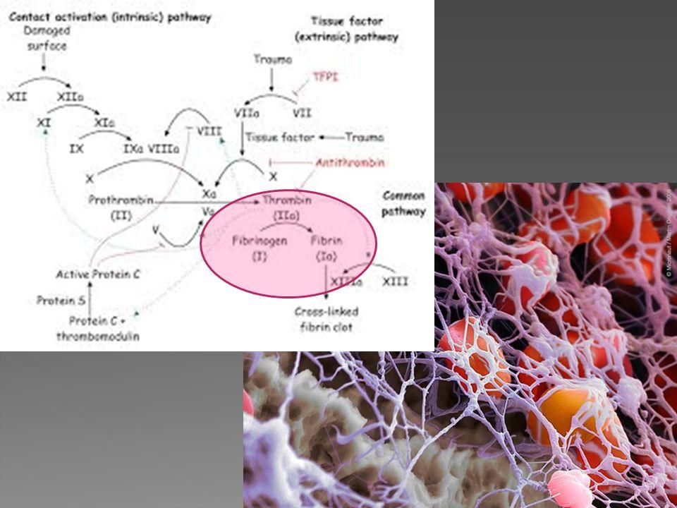 Pas de risque thrombotique avéré claire: de Moerloose P, Fibrinogen and the risk of thrombosis.