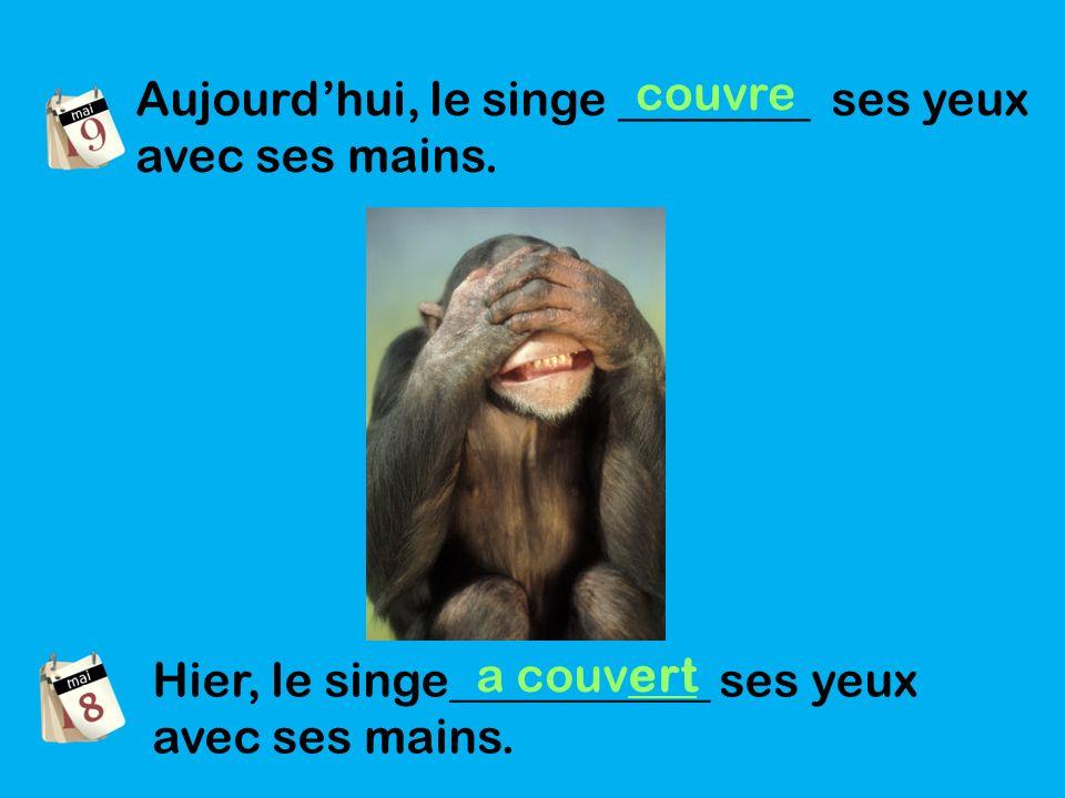 Aujourdhui, le singe ________ ses yeux avec ses mains.