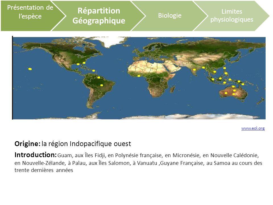 Cycle Biologique Présentation de lespèce Répartition Géographique Biologie Limites physiologiques Les larves : Zooplonctonophages les juvéniles, les adultes: omnivores Maturité sexuelle: de 5 à 6 mois (les femelles muent avant laccouplement)