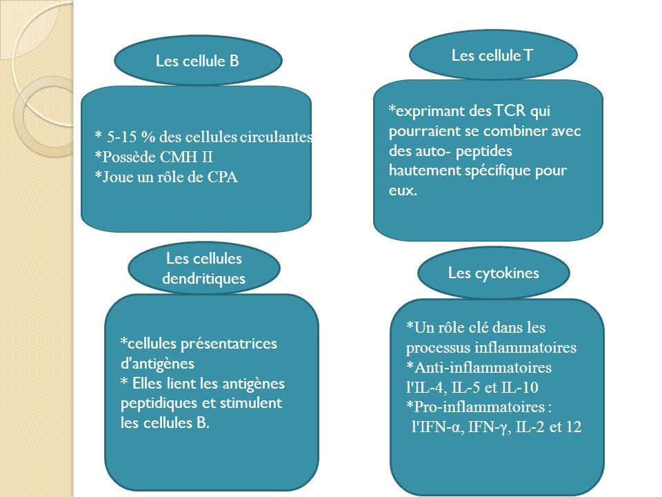 Les cellule B * 5-15 % des cellules circulantes *Possède CMH II *Joue un rôle de CPA Les cellule T Les cellules dendritiques *cellules présentatrices