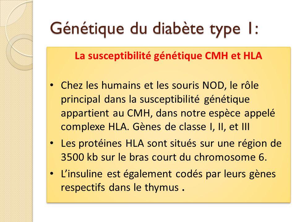 Génétique du diabète type 1: La susceptibilité génétique CMH et HLA Chez les humains et les souris NOD, le rôle principal dans la susceptibilité génét