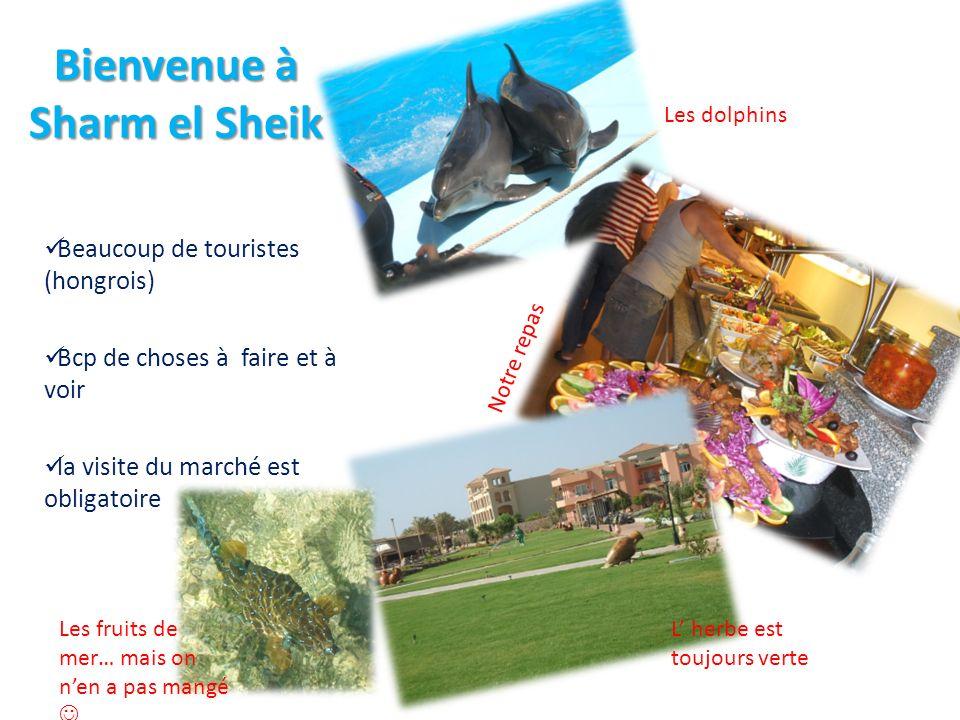 Bienvenue à Sharm el Sheik Beaucoup de touristes (hongrois) Bcp de choses à faire et à voir la visite du marché est obligatoire Les dolphins Notre repas L herbe est toujours verte Les fruits de mer… mais on nen a pas mangé