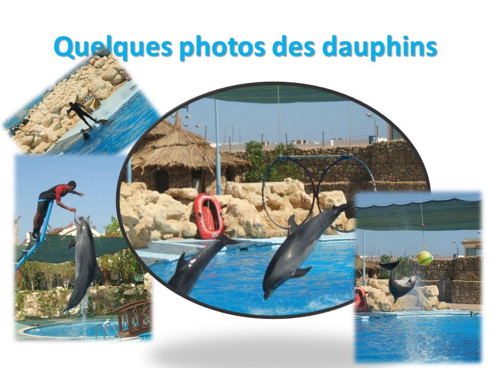 Quelques photos des dauphins