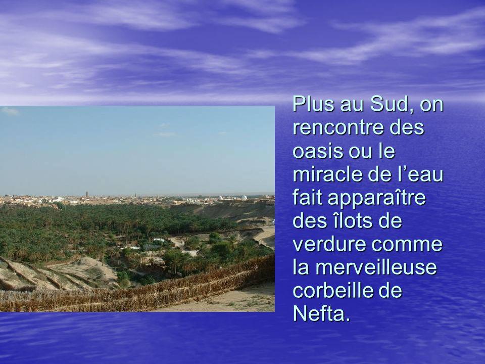 Plus au Sud, on rencontre des oasis ou le miracle de leau fait apparaître des îlots de verdure comme la merveilleuse corbeille de Nefta. Plus au Sud,