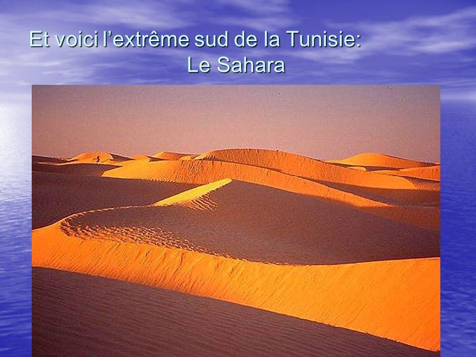 Et voici lextrême sud de la Tunisie: Le Sahara