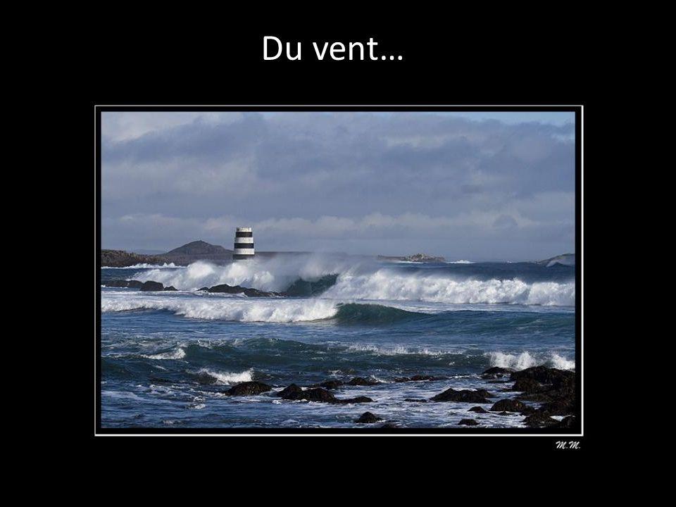 Des zozios sur la mer…