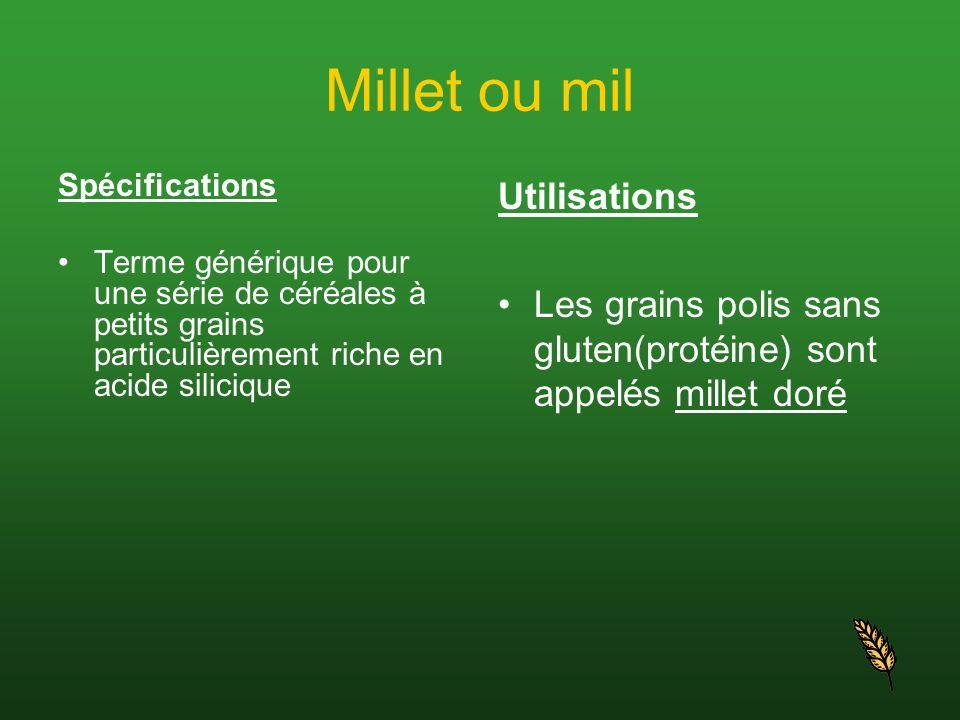 Millet ou mil Spécifications Terme générique pour une série de céréales à petits grains particulièrement riche en acide silicique Utilisations Les gra