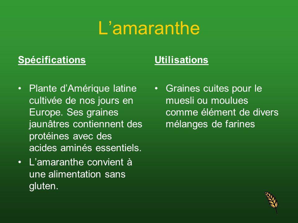 Lamaranthe Spécifications Plante dAmérique latine cultivée de nos jours en Europe. Ses graines jaunâtres contiennent des protéines avec des acides ami