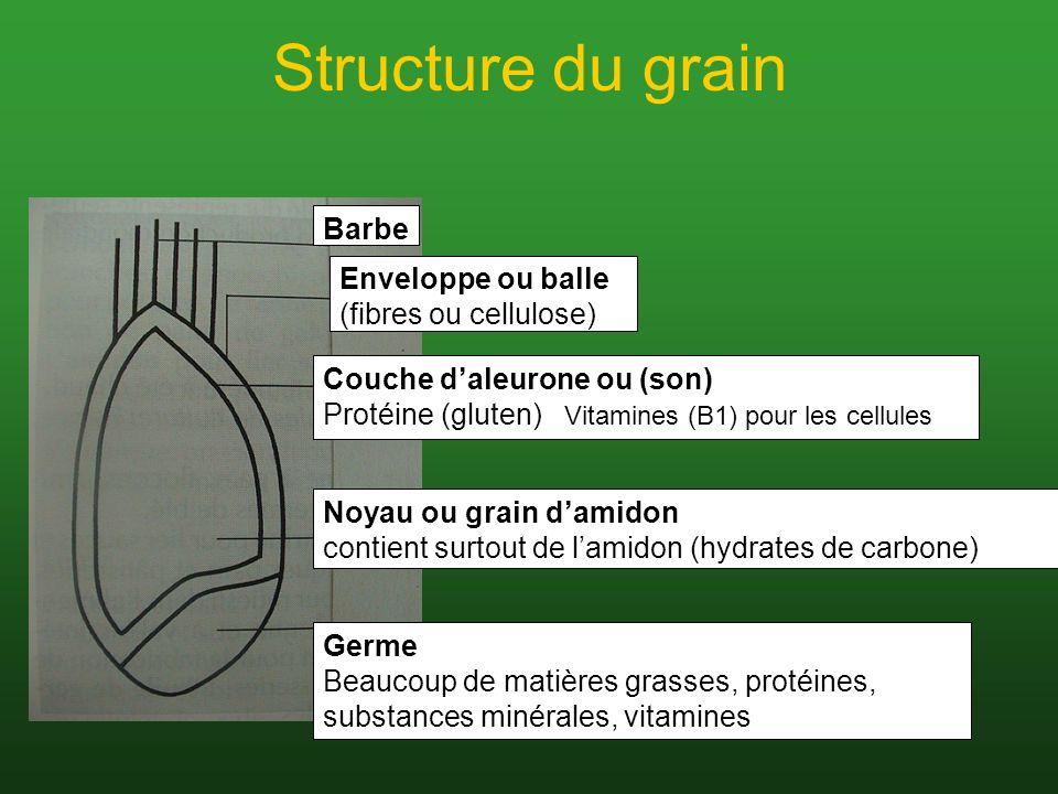 Structure du grain Barbe Enveloppe ou balle (fibres ou cellulose) Couche daleurone ou (son) Protéine (gluten) Vitamines (B1) pour les cellules Noyau o