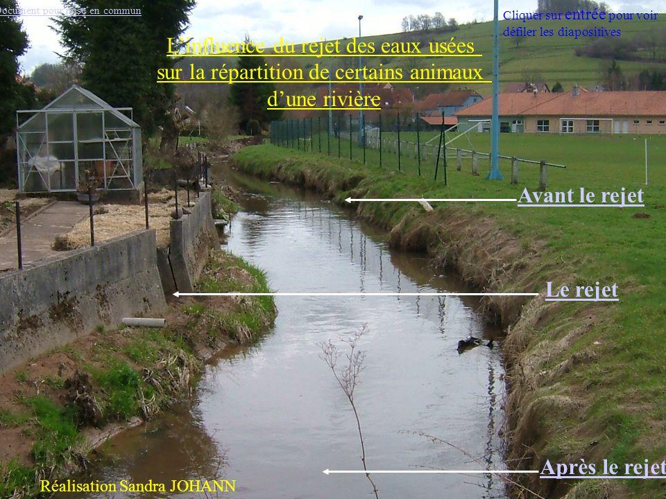 Les animaux Retour à la rivière Peu de matière organique Peu de bactéries Beaucoup de dioxygène Cliquer sur entrée