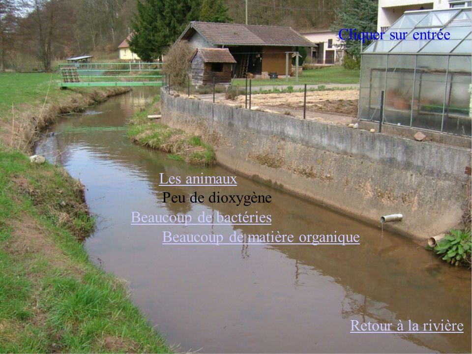 Retour à la rivière Les animaux Beaucoup de matière organique Beaucoup de bactéries Peu de dioxygène Cliquer sur entrée